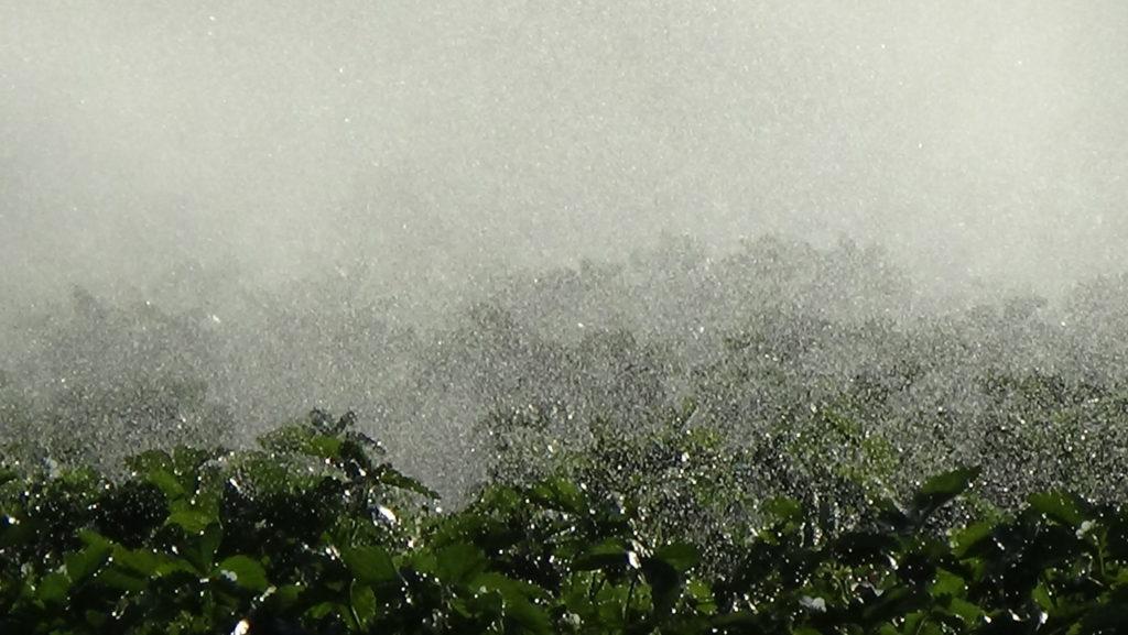 Nawadnianie-plantacji-truskawek-za-pomocą-deszczowni